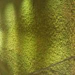Un mur décoratif mais qui s'émiette